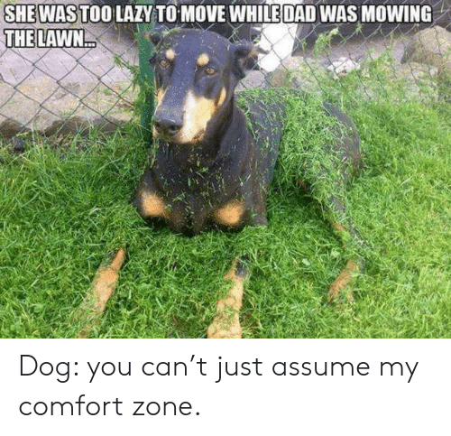 comfort: SHEWAS TOO LAZY TO MOVE WHILE DAD WAS MOWING  THE LAWN Dog: you can't just assume my comfort zone.