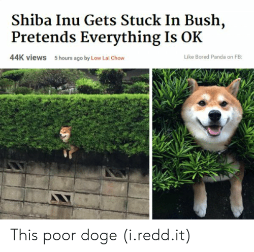 Bored Panda: Shiba Inu Gets Stuck In Bush,  Pretends Everything Is OK  44K views  5 hours ago by Low Lai Chow  Like Bored Panda on FB: This poor doge (i.redd.it)