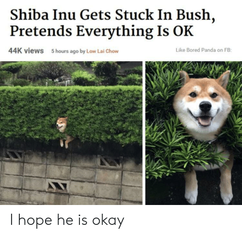 Bored Panda: Shiba Inu Gets Stuck In Bush,  Pretends Everything Is OK  44K views  5 hours ago by Low Lai Chow  Like Bored Panda on FB I hope he is okay