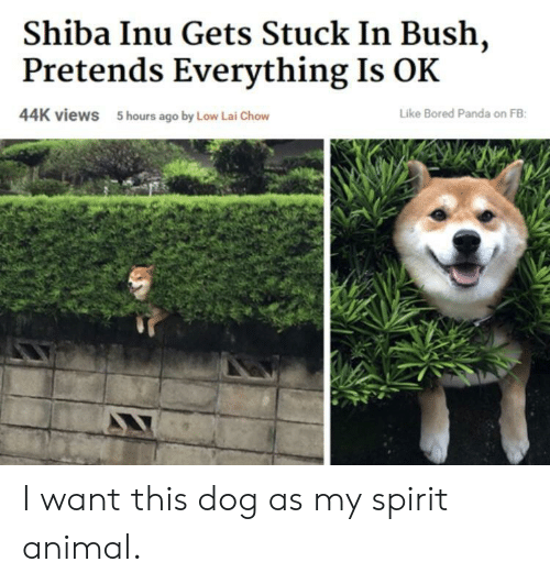 Bored Panda: Shiba Inu Gets Stuck In Bush,  Pretends Everything Is OK  44K views  5 hours ago by Low Lai Chow  Like Bored Panda on FB I want this dog as my spirit animal.
