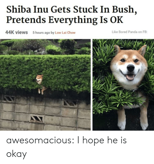 Bored Panda: Shiba Inu Gets Stuck In Bush,  Pretends Everything Is OK  44K views  5 hours ago by Low Lai Chow  Like Bored Panda on FB awesomacious:  I hope he is okay