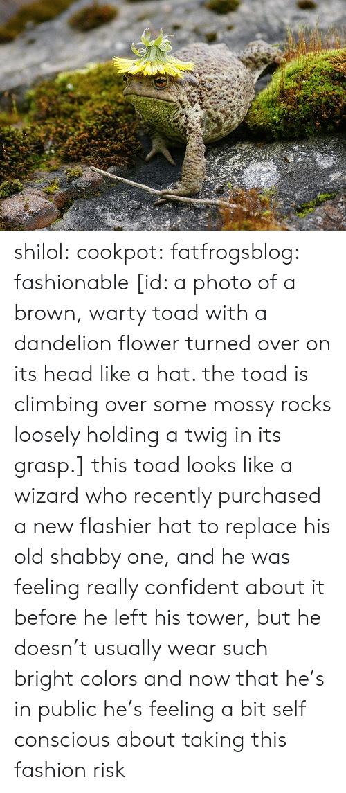 conscious: shilol: cookpot:  fatfrogsblog: fashionable [id: a photo of a brown, warty toad with a dandelion flower turned over on its head like a hat. the toad is climbing over some mossy rocks loosely holding a twig in its grasp.]   this toad looks like a wizard who recently purchased a new flashier hat to replace his old shabby one, and he was feeling really confident about it before he left his tower, but he doesn't usually wear such bright colors and now that he's in public he's feeling a bit self conscious about taking this fashion risk