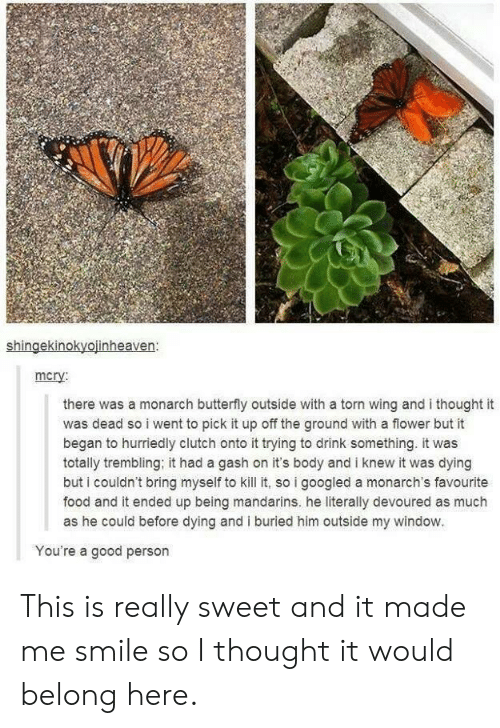 torn: shingekinokyojinheaven:  mcry  there was a monarch butterfly outside with a torn wing and i thought it  was dead so i went to pick it up off the ground with a flower but it  began to hurriedly clutch onto it trying to drink something. it was  totally trembling, it had a gash on it's body and i knew it was dying  but i couldn't bring myself to kill it, so i googled a monarch's favourite  food and it ended up being mandarins. he literally devoured as much  as he could before dying and i buried him outside my window.  You're a good person This is really sweet and it made me smile so I thought it would belong here.