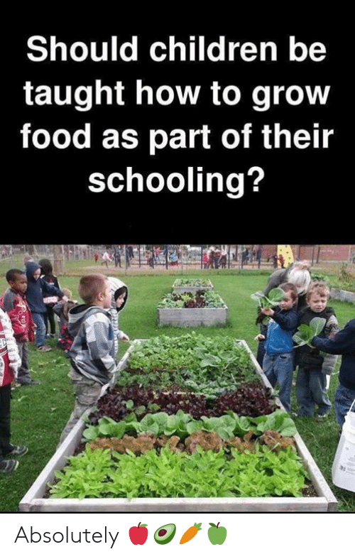 Children, Food, and Memes: Should children be  taught how to grow  food as part of their  schooling? Absolutely 🍎🥑🥕🍏
