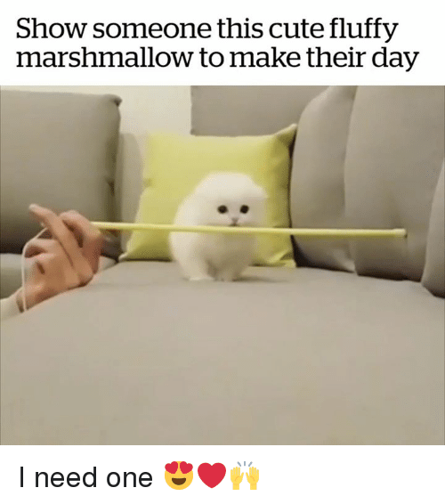 Cute, Marshmallow, and One: Show someone this cute fluffy  marshmallow to make their day I need one 😍❤️🙌