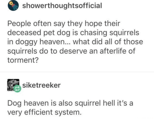 Heaven, Squirrel, and Hell: showerthoughtsofficial  People often say they hope their  deceased pet dog is chasing squirrels  in doggy heaven... what did all of those  squirrels do to deserve an afterlife of  torment?  siketreeker  Dog heaven is also squirrel hell it's a  very efficient system