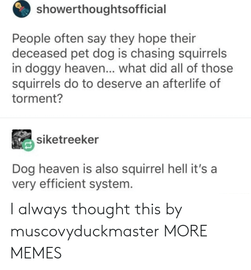 Dank, Heaven, and Memes: showerthoughtsofficial  People often say they hope their  deceased pet dog is chasing squirrels  in doggy heaven... what did all of those  squirrels do to deserve an afterlife of  torment?  siketreeker  Dog heaven is also squirrel hell it's a  very efficient system I always thought this by muscovyduckmaster MORE MEMES