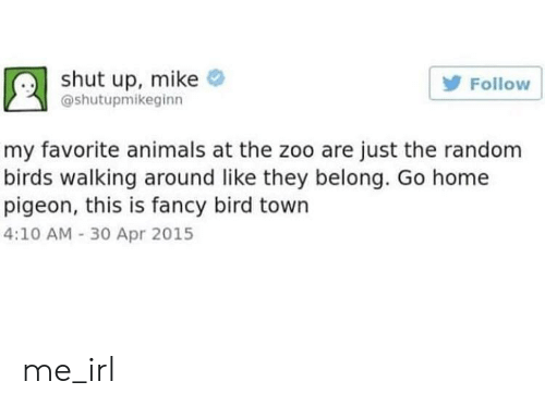 Animals, Shut Up, and Birds: shut up, mike  Follow  @shutupmikeginn  my favorite animals at the zoo are just the random  birds walking around like they belong. Go home  pigeon, this is fancy bird town  4:10 AM -30 Apr 2015 me_irl