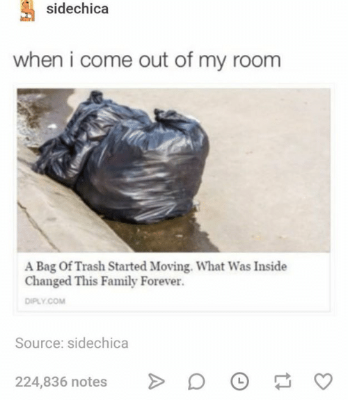 Family, Trash, and Forever: sidechica  when i come out of my room  A Bag Of Trash Started Moving. What Was Inside  Changed This Family Forever.  DIPLY.COM  Source: sidechica  224,836 notes  D。