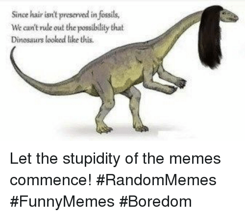 commence: Since hair isn't preserved in fossils,  We can't rule out the possibility that  Dinosaurs looked ltike this. Let the stupidity of the memes commence! #RandomMemes #FunnyMemes #Boredom