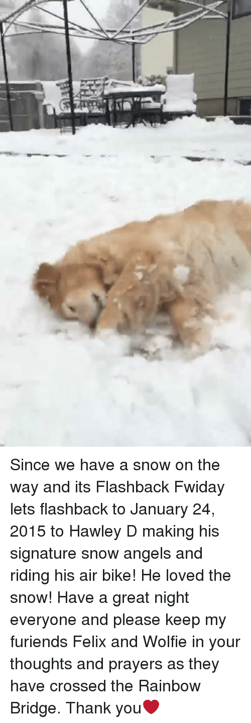 wolfies: Since we have a snow on the way and its Flashback Fwiday lets flashback to January 24, 2015 to Hawley D making his signature snow angels and riding his air bike! He loved the snow! Have a great night everyone and please keep my furiends Felix and Wolfie in your thoughts and prayers as they have crossed the Rainbow Bridge. Thank you❤️
