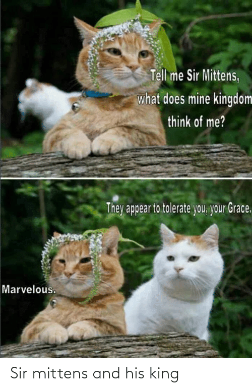 king: Sir mittens and his king