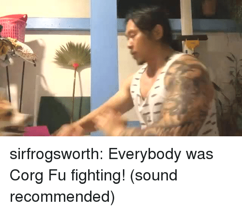 Tumblr, Blog, and Com: sirfrogsworth: Everybody was Corg Fu fighting! (sound recommended)