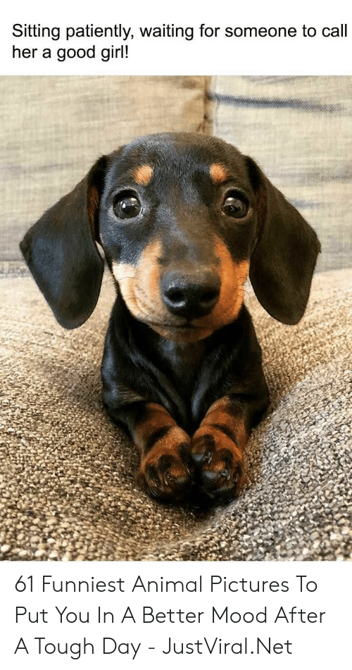 Patiently Waiting: Sitting patiently, waiting for someone to call  her a good girl! 61 Funniest Animal Pictures To Put You In A Better Mood After A Tough Day - JustViral.Net