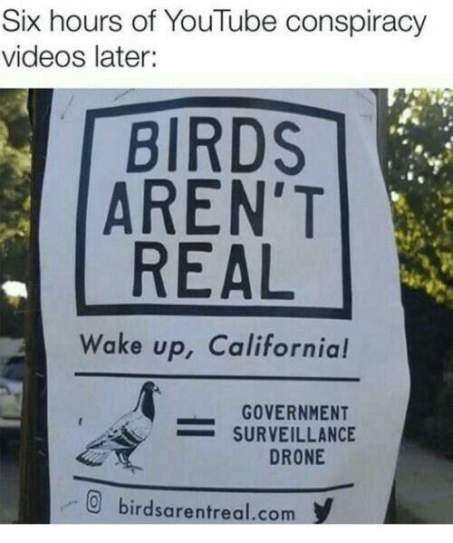 Drone: Six hours of YouTube conspiracy  videos later:  BIRDS  AREN'T  REAL  Wake up, California!  GOVERNMENT  -SURVEILLANCE  DRONE  birdsarentreal.com