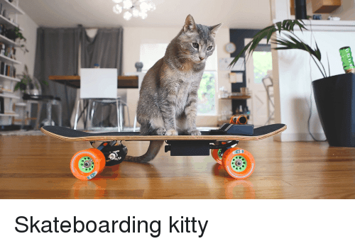 Skateboarding, Cat, and Skateboarding: Skateboarding kitty