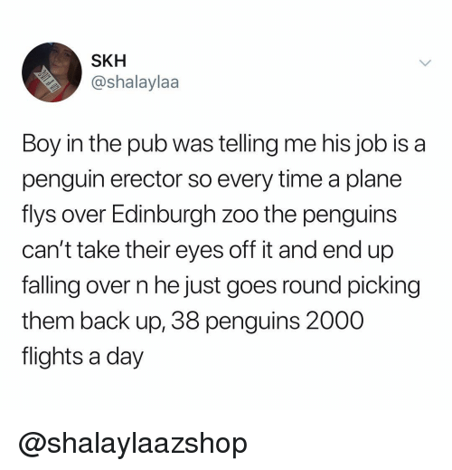 Penguin, Penguins, and Time: SKH  @shalaylaa  Boy in the pub was telling me his job is a  penguin erector so every time a plane  flys over Edinburgh zoo the penguins  can't take their eyes off it and end up  falling over n he just goes round picking  them back up, 38 penguins 2000  flights a day @shalaylaazshop