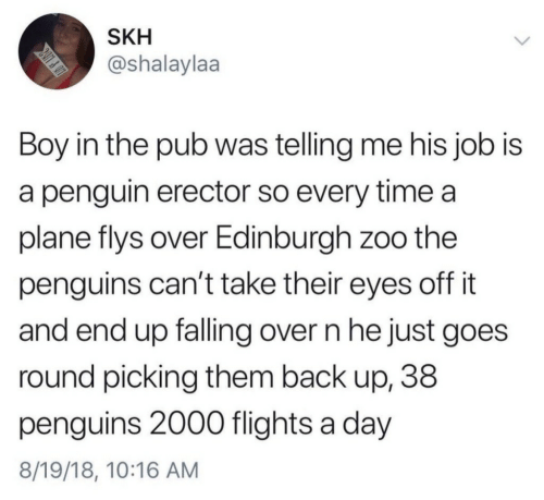 Penguins: SKH  @shalaylaa  Boy in the pub was telling me his job is  a penguin erector so every time a  plane flys over Edinburgh zoo the  penguins can't take their eyes off it  and end up falling over n he just goes  round picking them back up, 38  penguins 2000 flights a day  8/19/18, 10:16 AM