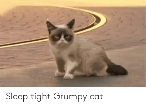 grumpy: Sleep tight Grumpy cat
