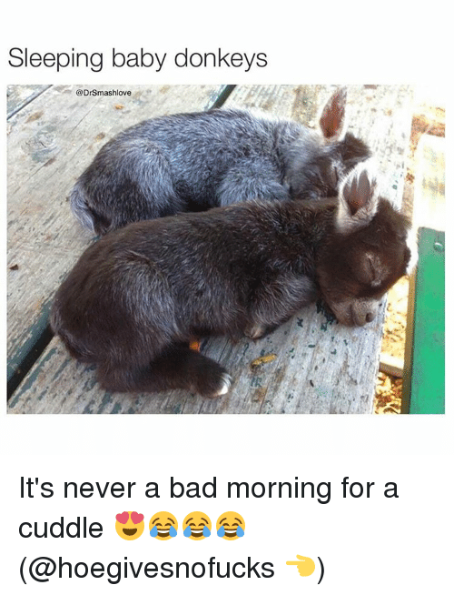 Bad Morning: Sleeping baby donkeys  @DrSmashlove It's never a bad morning for a cuddle 😍😂😂😂 (@hoegivesnofucks 👈)