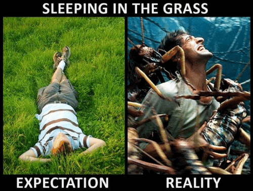 Sleeping In: SLEEPING IN THE GRASS  EXPECTATION  REALITY