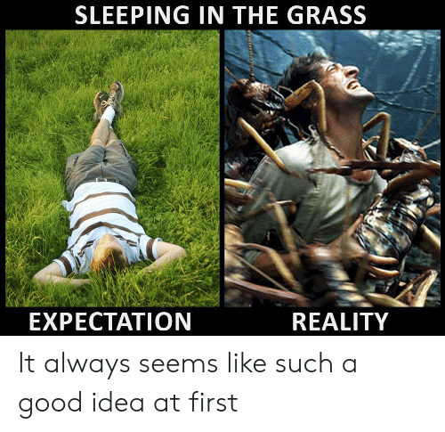 Sleeping In: SLEEPING IN THE GRASS  EXPECTATION  REALITY It always seems like such a good idea at first