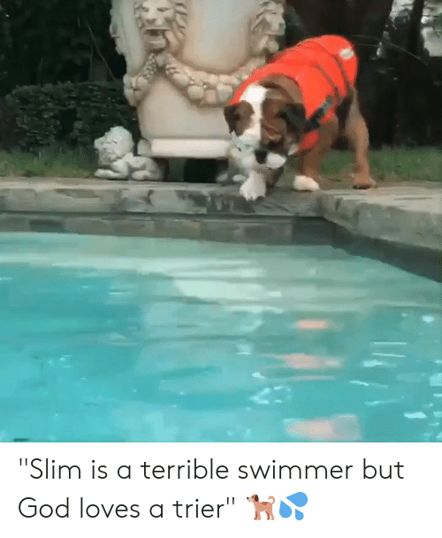 "swimmer: ""Slim is a terrible swimmer but God loves a trier"" 🐕💦"