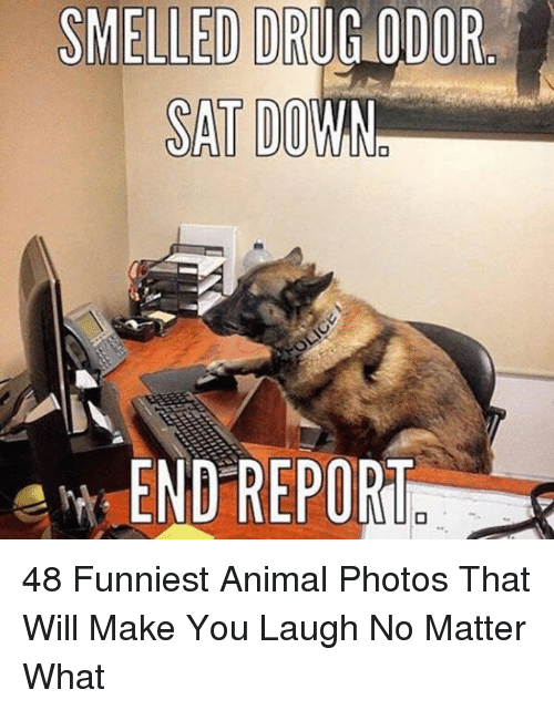 Animal, Drug, and Art: SMELLED DRUG ODOR  SAT DO  Art-END REPORu 48 Funniest Animal Photos That Will Make You Laugh No Matter What