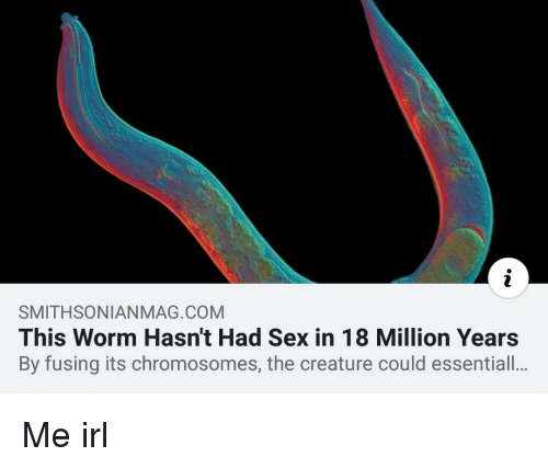 Sex, Irl, and Me IRL: SMITHSONIANMAG.COM  This Worm Hasn't Had Sex in 18 Million Years  By fusing its chromosomes, the creature could essentiall.. Me irl