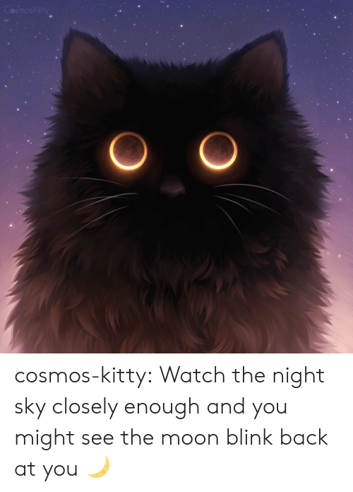 Target, Tumblr, and Blog: smosk itty cosmos-kitty:  Watch the night sky closely enough and you might see the moon blink back at you 🌙