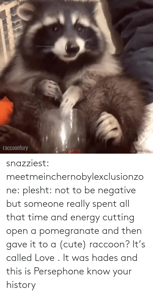 Was: snazziest:  meetmeinchernobylexclusionzone:  plesht: not to be negative but someone really spent all that time and energy cutting open a pomegranate and then gave it to a (cute) raccoon? It's called Love .   It was hades and this is Persephone know your history
