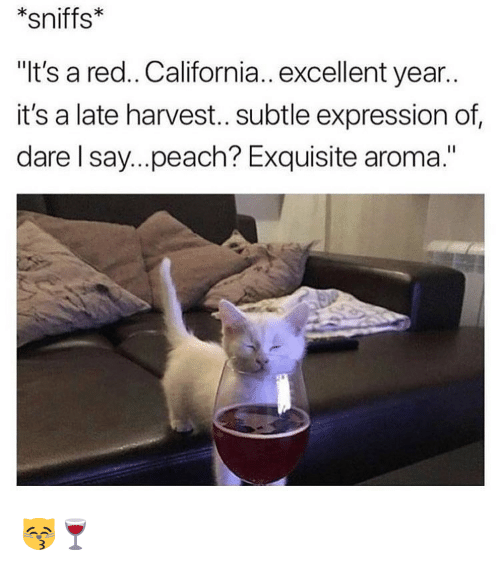 """aroma: *sniffs*  """"It's a red.. California.. excellent year.  it's a late harvest.. subtle expression of  dare l say...peach? Exquisite aroma."""" 😽🍷"""