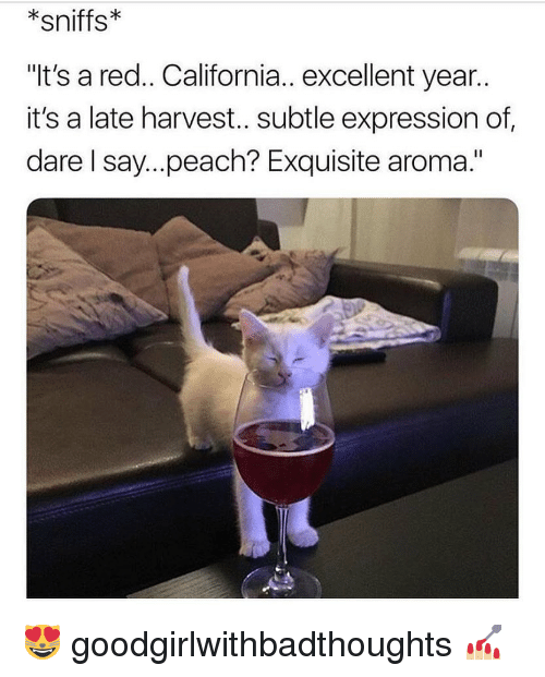 """aroma: sniffs  """"It's a red.. California.. excellent year..  it's a late harvest.. subtle expression of  dare I say...peach? Exquisite aroma."""" 😻 goodgirlwithbadthoughts 💅🏼"""