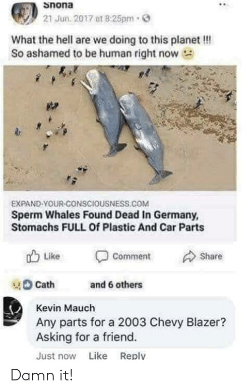 Ashamedness: Snona  21 Jun. 2017 at 8:25pm.  What the hell are we doing to this planet !!!  So ashamed to be human right now  EXPAND-YOUR-CONSCIOUSNESS.COM  Sperm Whales Found Dead In Germany,  Stomachs FULL Of Plastic And Car Parts  山Like Comment Share  tand 6 others  Cath  Kevin Mauch  Any parts for a 2003 Chevy Blazer?  Asking for a friend.  Just now Like Reply Damn it!