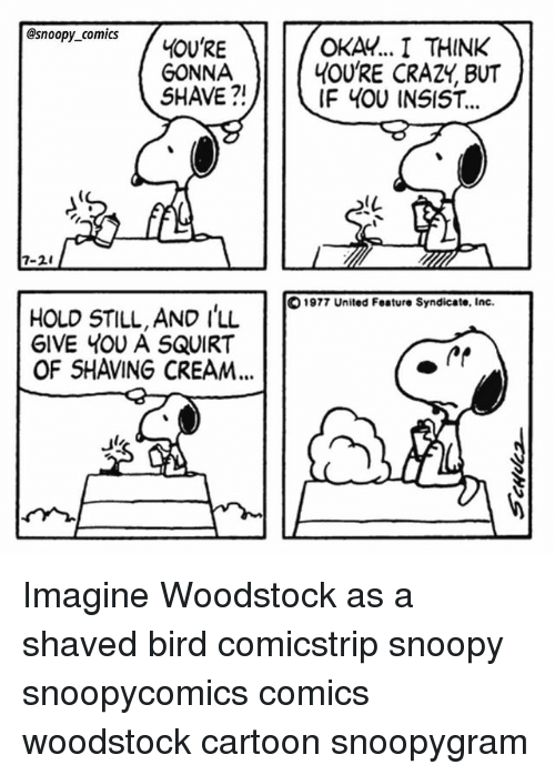 Crazy, Memes, and Squirt: @snoopy_comics  GONNA  SHAVE ?!  OKAY.. I THINK  4OU'RE CRAZY, BUT  IF 4OU INSIST...  IL  7-2  1977 United Feature Syndicate, Inc  HOLD STILL, AND I'LL  GIVE YOU A SQUIRT  11  OF SHAVING CREAM... Imagine Woodstock as a shaved bird comicstrip snoopy snoopycomics comics woodstock cartoon snoopygram