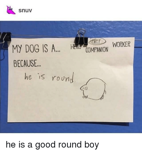 Good, Boy, and Because: snuv  COMPANION WORKER  BECAUSE..  he is roun  IS he is a good round boy