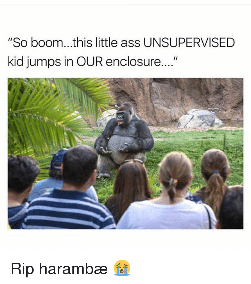 """Harambism: """"So boom...this little ass UNSUPERVISED  kid jumps in OUR enclosure...."""" Rip harambæ 😭"""