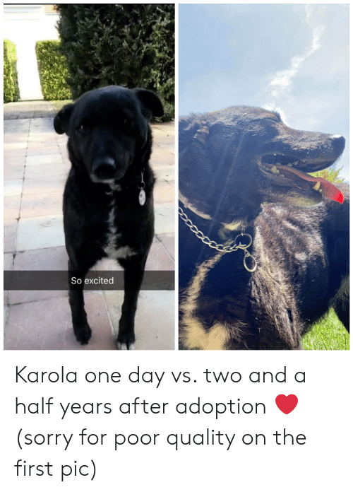 Sorry, One, and One Day: So excited Karola one day vs. two and a half years after adoption ❤️ (sorry for poor quality on the first pic)