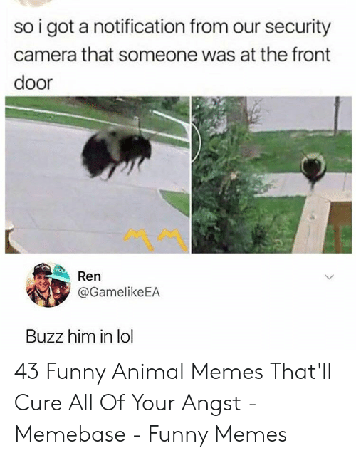 funny animal memes: so i got a notification from our security  camera that someone was at the front  door  Ren  @GamelikeEA  Buzz him in lol 43 Funny Animal Memes That'll Cure All Of Your Angst - Memebase - Funny Memes