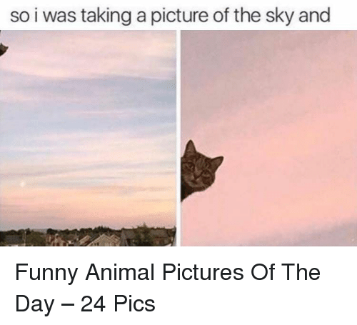 Taking A Picture: so i was taking a picture of the sky and Funny Animal Pictures Of The Day – 24 Pics