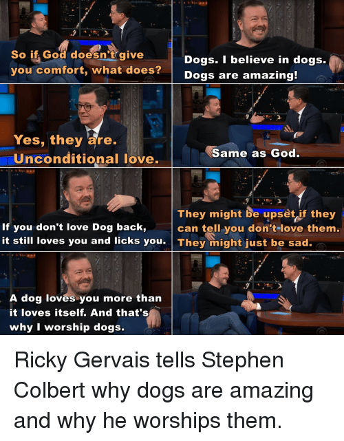 Ricky Gervais: So if God doesn't give  you comfort, what does?  Dogs. I believe in dogs.  Dogs are amazing  Yes, they are.  Uinconditional love.  Same as God  They might be upset if they  can tell you don tlove them.  If you don't love Dog back,  it still loves you and licks you They might just be sad.  A dog loves you more than  it loves itself. And that's  why I worship dogs. Ricky Gervais tells Stephen Colbert why dogs are amazing and why he worships them.