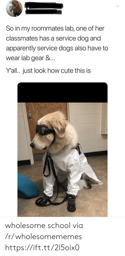 Apparently, Cute, and Dogs: So in my roommates lab, one of her  classmates has a service dog and  apparently service dogs also have to  wear lab gear &...  Y'all.. just look how cute this is wholesome school via /r/wholesomememes https://ift.tt/2l5oix0