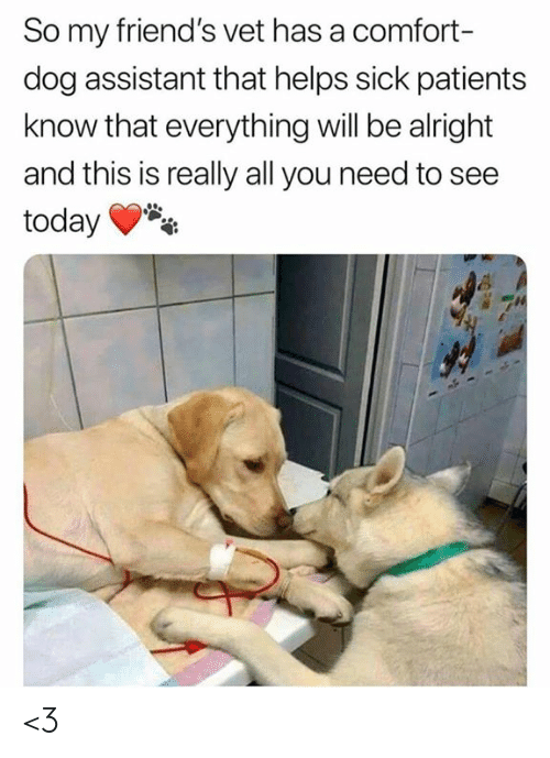 Friends, Memes, and Today: So my friend's vet has a comfort-  dog assistant that helps sick patients  know that everything will be alright  and this is really all you need to see  today <3