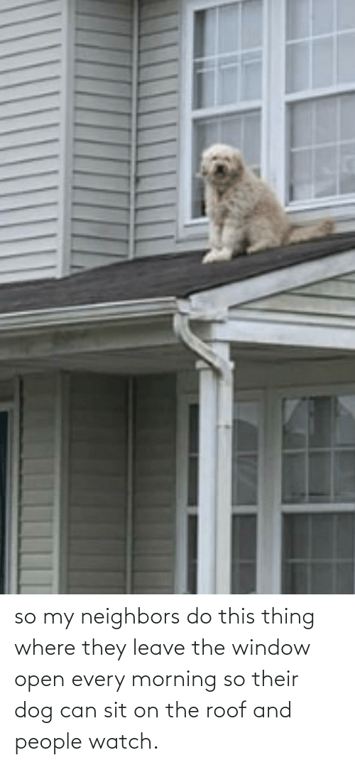 Neighbors: so my neighbors do this thing where they leave the window open every morning so their dog can sit on the roof and people watch.