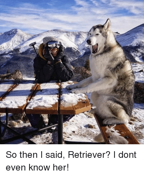 Her, Don, and Then: So then I said, Retriever? I dont even know her!