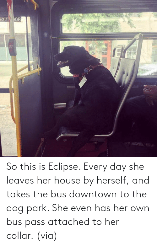 Takes: So this is Eclipse. Every day she leaves her house by herself, and takes the bus downtown to the dog park. She even has her own bus pass attached to her collar. (via)