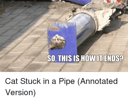 This Is How It Ends: SO, THIS IS HOW IT ENDS Cat Stuck in a Pipe (Annotated Version)