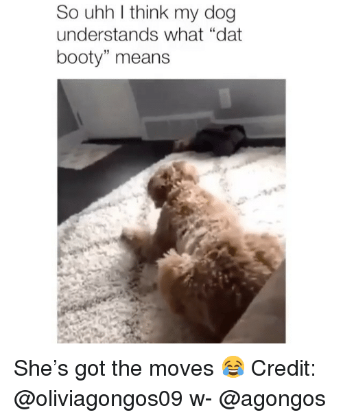 """Booty, Memes, and 🤖: So uhh l think my dog  understands what """"dat  booty"""" means  15 She's got the moves 😂 Credit: @oliviagongos09 w- @agongos"""