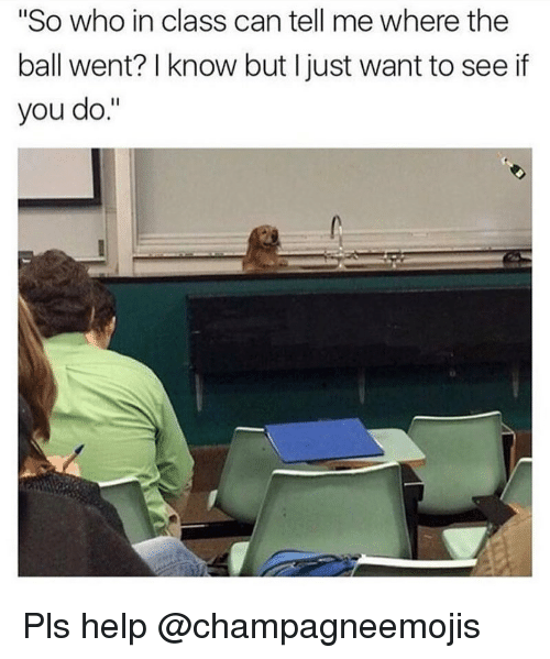 "Funny, Help, and Girl Memes: ""So who in class can tell me where the  ball went? I know but I just want to see if  you do."" Pls help @champagneemojis"