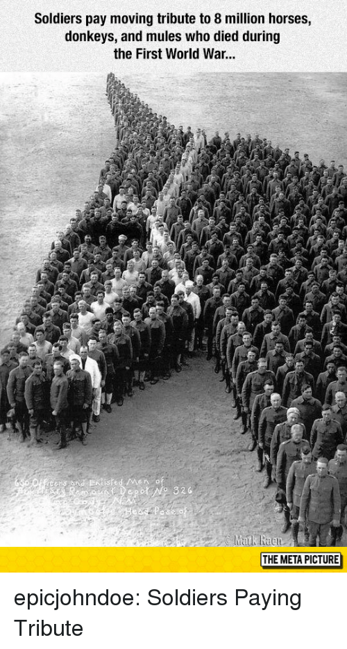 Horses, Soldiers, and Tumblr: Soldiers pay moving tribute to 8 million horses,  donkeys, and mules who died during  the First World War...  THE META PICTURE epicjohndoe:  Soldiers Paying Tribute